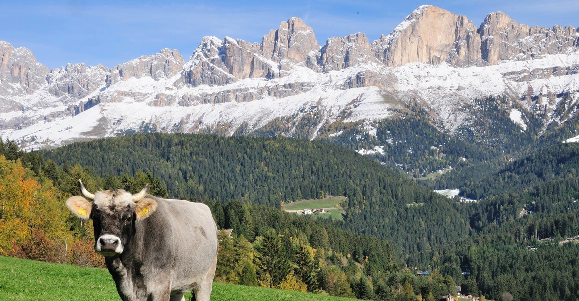 ARCHE Hof Welschnofen in Südtirol