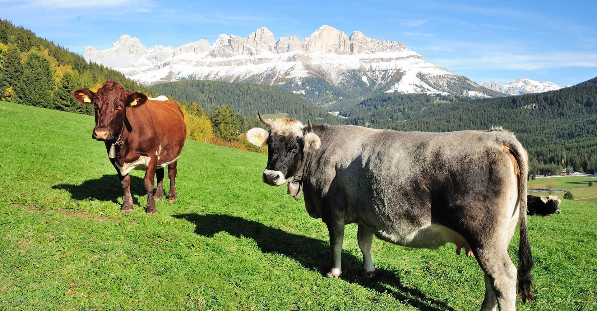 Urlaub auf dem Bauernhof Welschnofen